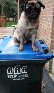 recyclepug